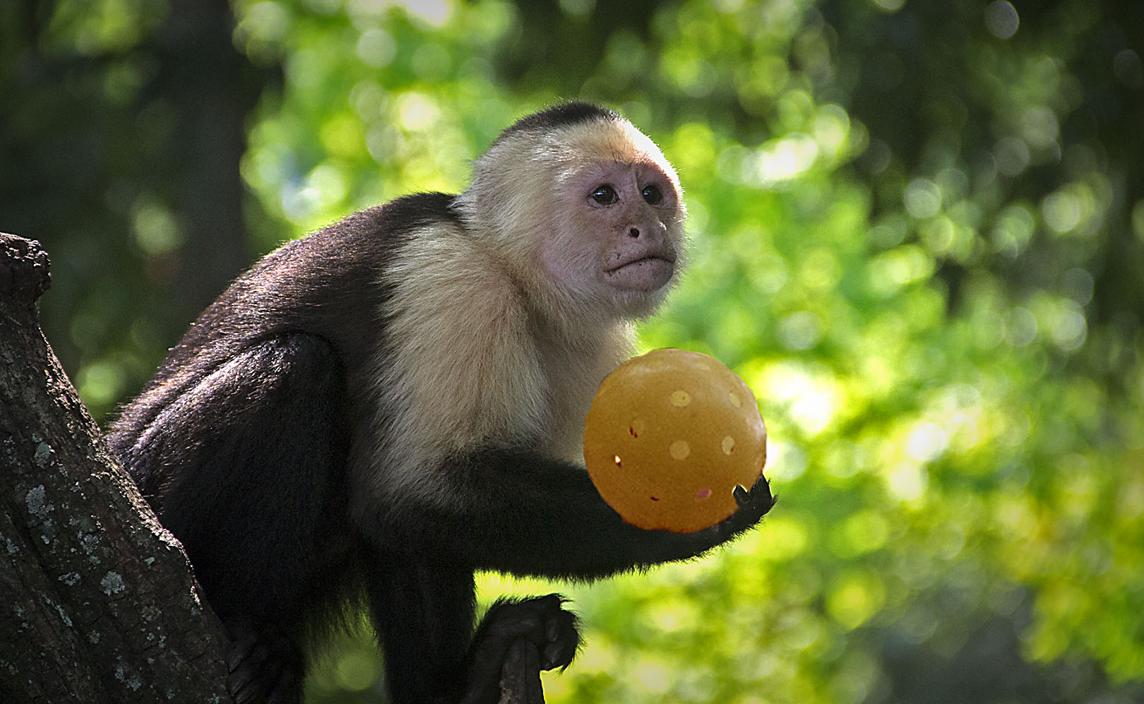 monkey with ball.jpg